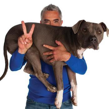 Cesar-Dog